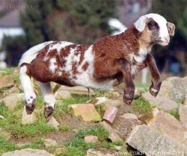 حیوانات دورگه-هیبرید