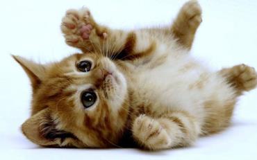 گربه ها احساسات انسان ها را به بازی می گیرند - نتایج عجیب مقایسه انسان با حیوانات