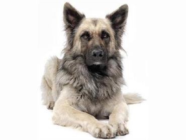 سگ ها از انسان ها ۷ برابر بزرگتر هستند - نتایج عجیب مقایسه انسان با حیوانات