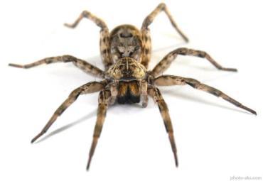 عنکبوت ها عاشق بوی بدپا و خون انسان هستند - نتایج عجیب مقایسه انسان با حیوانات