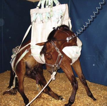 آنسفالیت ویروسى اسب