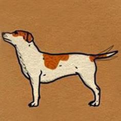 سگ صاف ایستاده