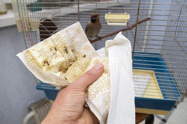نظافت قفس پرنده با مواد طبیعی