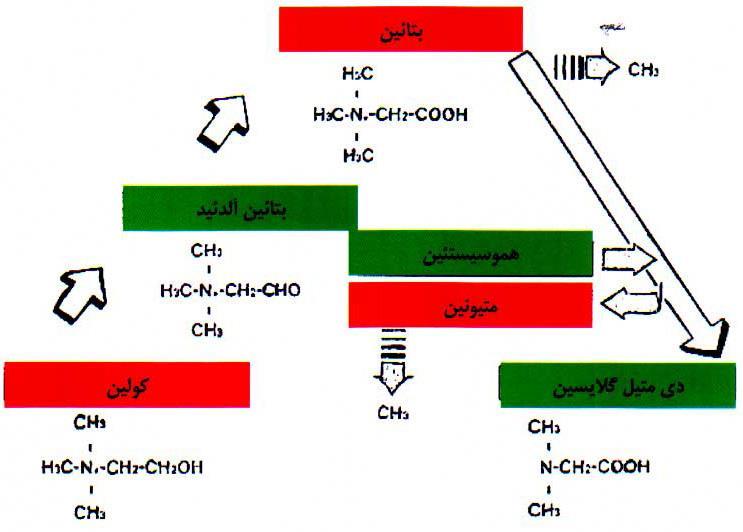 ویژگی ریشه متیل دهی و جایگزینی با اسید آمینه متیونین و کولین