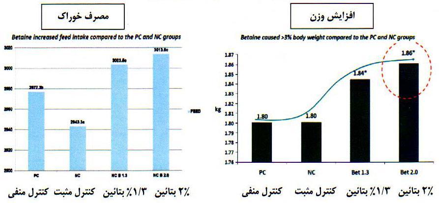 نقش بتائین در افزایش خوراک مصرفی و افزایش وزن تحت تنش حرارتی