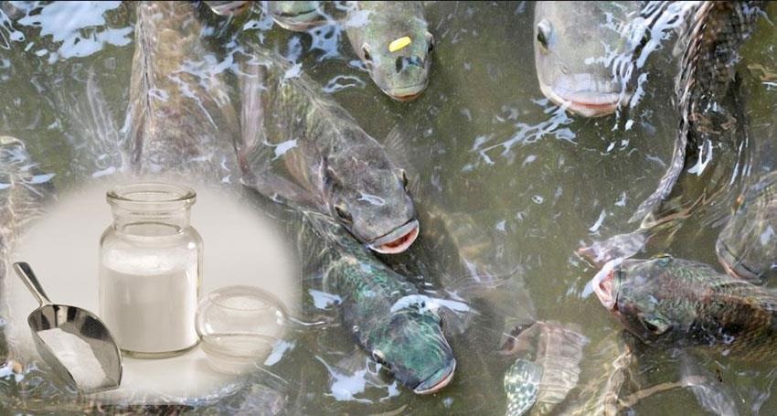 بتائین در خدمت تغذیه ماهی ها
