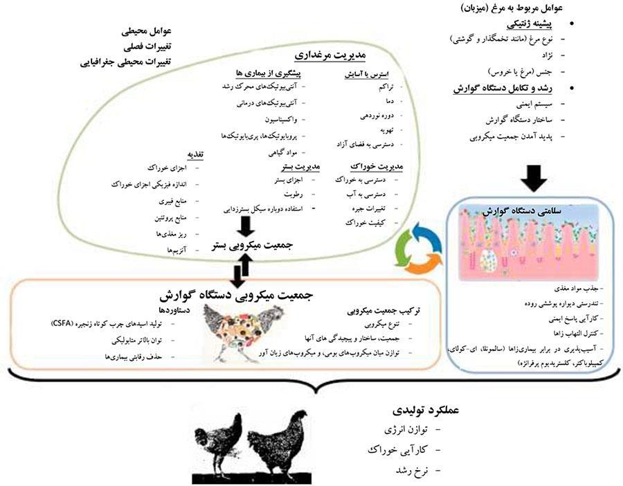 عوامل کلیدی محیطی و عوامل مربوط به میزبان و شکل جمعیت میکروبی دستگاه گوارش و رابطه آن با تندرستی و کارآیی تولیدی مرغ