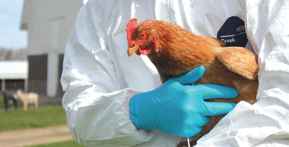 بیوسکیوریتی (BIOSECURITY) یا ایمنی زیست محیطی