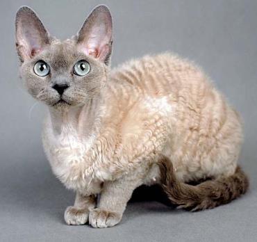 خلق و خوی گربه دون رکس