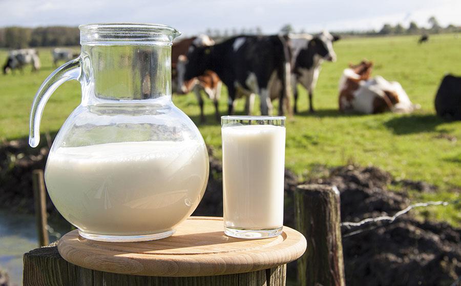 دیدگاه انتقال ژن و ایجاد حیوانات تراریخت حاوی شیر مناسب