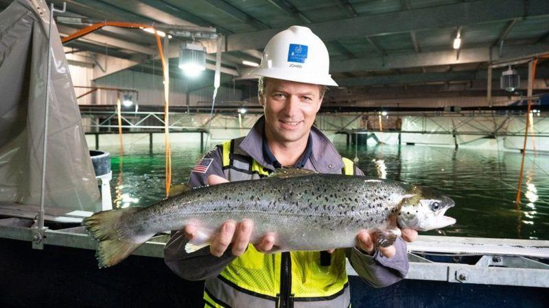 پرورش ماهی در خشکی درمقابل روش های سنتی