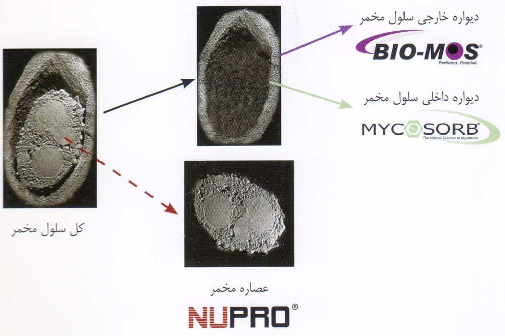 Nupro عصاره استخراج شده از مخمر ساکارومایسس سرویسیه
