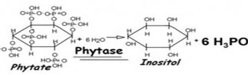 ساختار شیمیایی فیتات