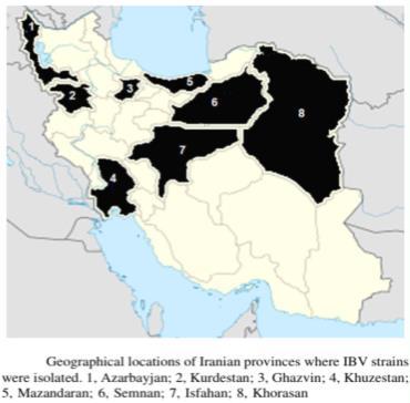 پراکندگی ژنوتیپهای مختلف ویروس برونشیت عفونی در ایران
