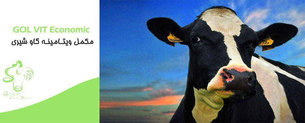 مکمل ویتامینه گاو شیری