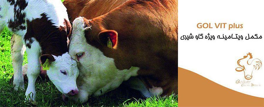 مکمل ویتامینه ویژه گاو شیری