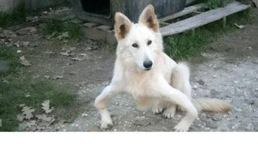 سرنوشت سگ پا پرانتزی در مؤسسه خیریه سگ ها