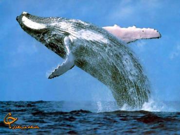 عجایبی جالب از دنیای حیوانات