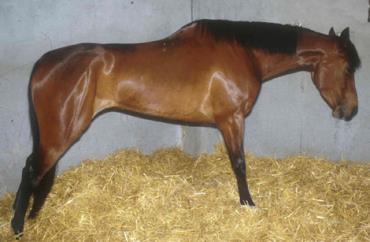 بیماری کولیک، علل ایجاد و نحوه درمان آن در اسب