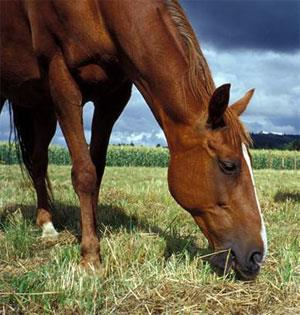مکمل های الکترولیت برای اسب
