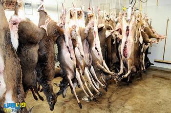 احتمال واردات گوشت گوزن و گاو روسی به ایران
