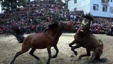 کتک کاری اسب