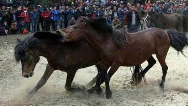 دعوای اسبها