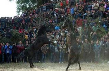 کتک کاری اسبها