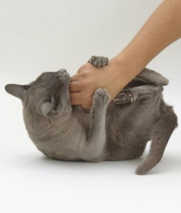 ۱۰ کاری که گربه ها از آنها متنفر هستند