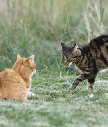 نوازش شکم گربه