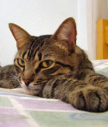 شانه زدن گربه