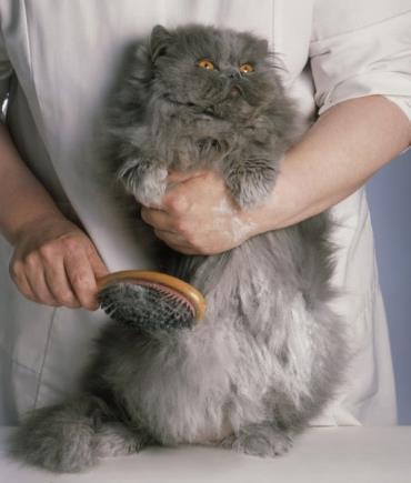 نوازش خشن گربه