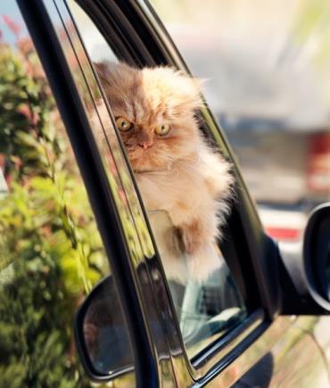 توجه زیاد به گربه
