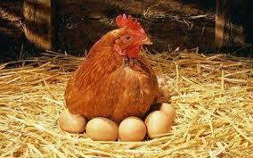 برآورد هزینه استفاده از پروتکسین در پرورش مرغ تخمگذار