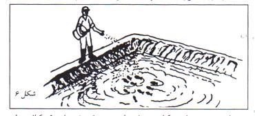 غذا برای رشد و پرورش ماهی در استخر
