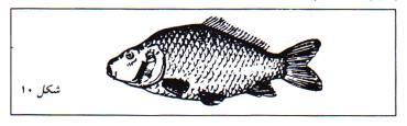 کپور ماهی