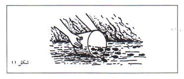 قرار دادن بچه ماهیها در داخل استخر