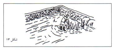 مراقبت از استخر پرورش ماهی