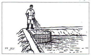 سطل کود در محوطه  برای سبز رنگ ماندن آب استخر پرورش ماهی