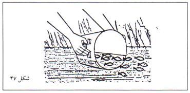 ظرف حاوی بچه ماهی ها را آرام در آب قرار دهید تا به درون استخر شنا کنند