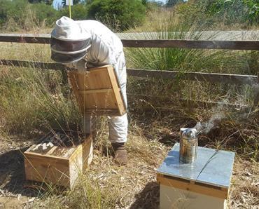 داروهای لازم جهت زمستانگذرانی زنبور عسل