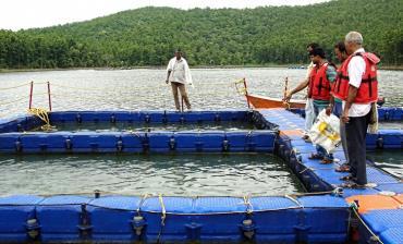 پرورش ماهی در قفس (بخش اول)