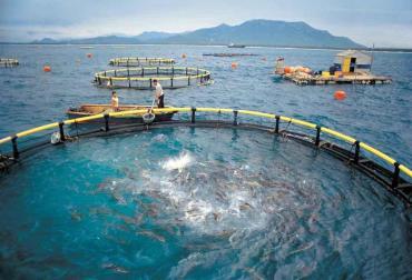پرورش ماهی در قفس (بخش چهارم)