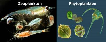 زی شناوران گیاهی و جانوری