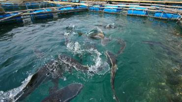 پرورش ماهیان گرمابی (بخش سوم)