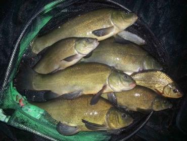 کود دهی استخرهای پرورش ماهی برای باروری طبیعی