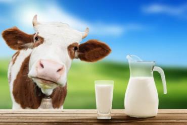 صد قانون کاربردی در تغذیه گاوهای شیری (بخش اول)