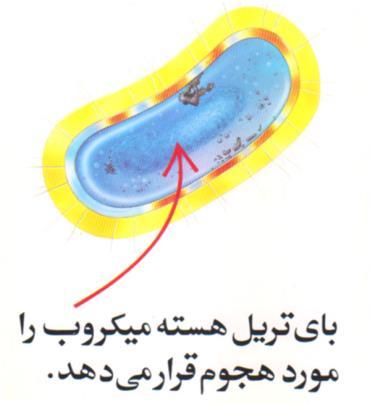 بای تریل هسته میکروب را مورد هجوم قرار می دهد