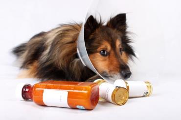 آشنایی با بیماریهای پوستی در سگها