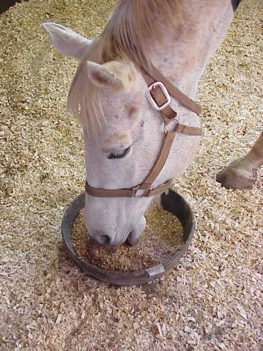 خوراک اسب